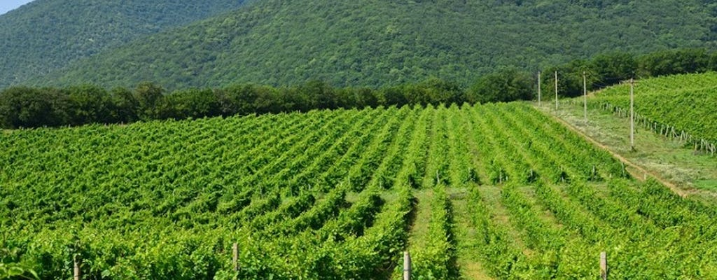 Индивидуальная экскурсия в Абрау-Дюрсо винодельческое хозяйство из Краснодара