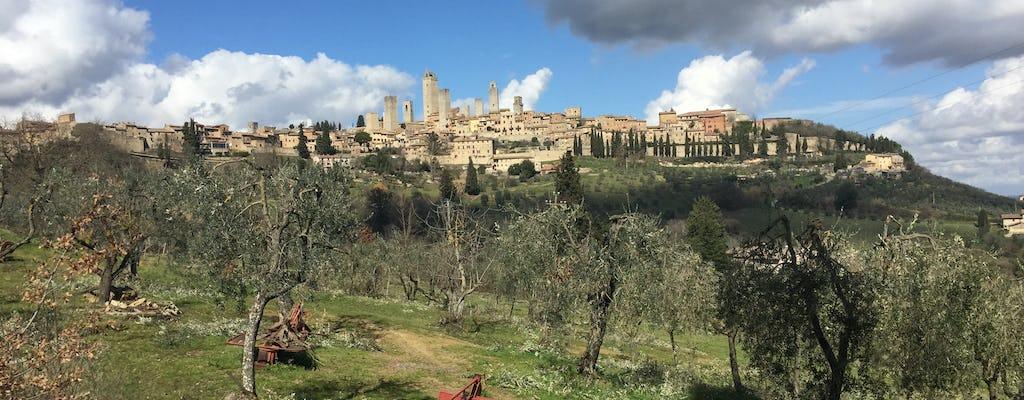 Saffron and Vernaccia wine tour in San Gimignano