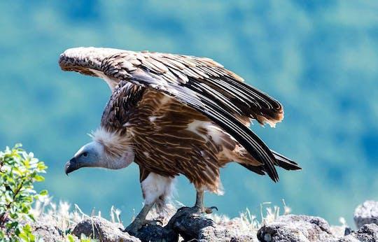 Observación privada de aves en 3 lugares únicos de Sofía