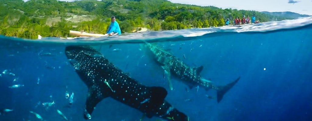 Aventure d'une journée complète au requin-baleine à Oslob et au canyoning