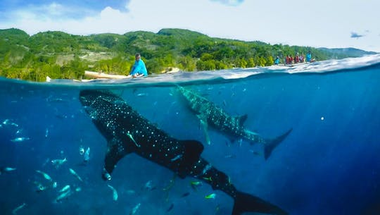 Full-day Oslob whale shark and canyoneering adventure