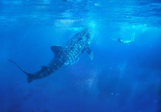 Ganztägige Begegnung mit Oslob-Walhaien mit Tumalog-Wasserfällen