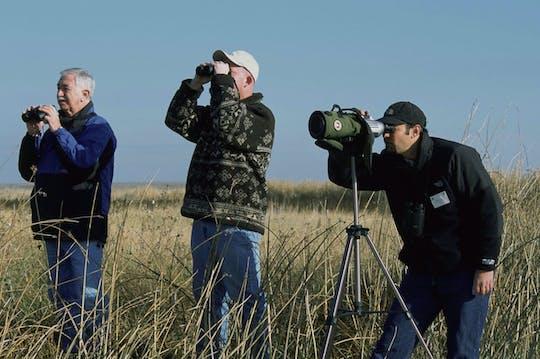 Bird watching at Souss Massa National Park from Agadir