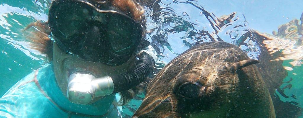 Поплавать с морскими котиками в Плеттенберг-Бей