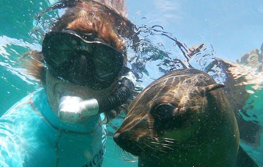 Zwem met zeehonden in Plettenberg Bay