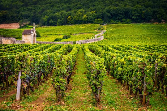 Burgundy wine day trip from Paris