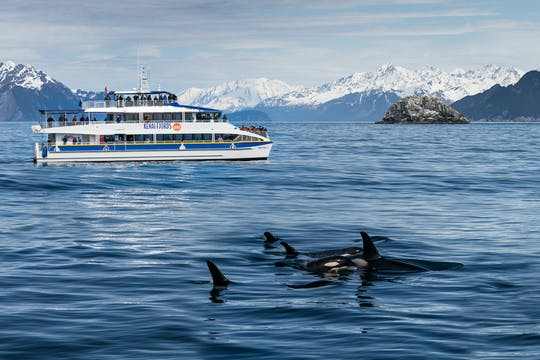 Kenai Fjords National Park glacier and wildlife morning cruise