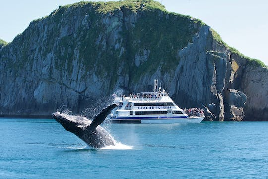 Full-Day Northwestern Fjord Adventure Cruise