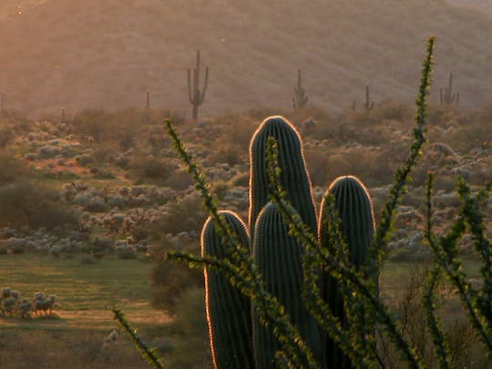 Private guided Phoenix and Scottsdale highlights half day tour