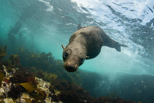 Seal viewing tour in Plettenberg Bay