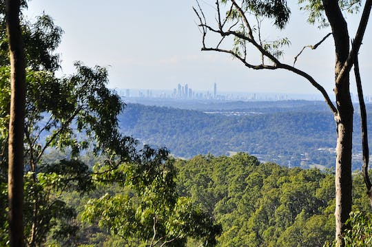 Tamborine Mountain tour