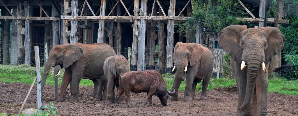 Aberdare National Park 2-day safari at Treetops Lodge