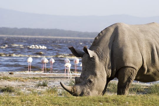 Lake Nakuru National Park 1-day safari