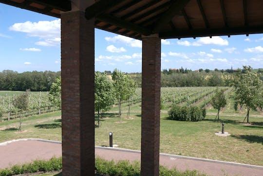 Tour e degustazione attraverso tre generazioni presso Merlotta vini