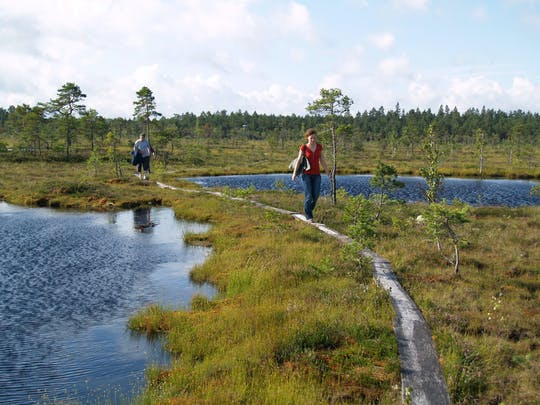 Excursão a pé e de canoa pelo parque nacional de Soomaa