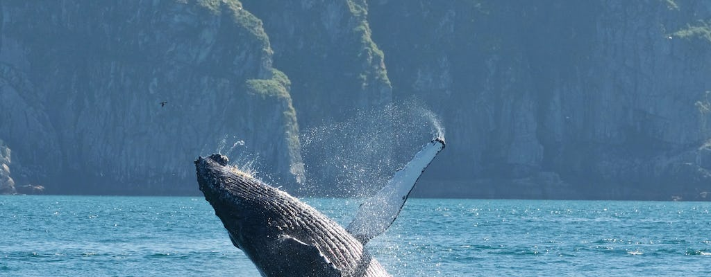 Kenai Fjords and Resurrection Bay Wildlife Cruise