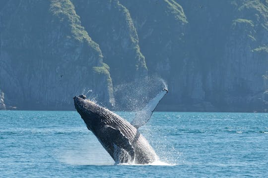 Kenai Fjords e Resurrection Bay Wildlife Cruise