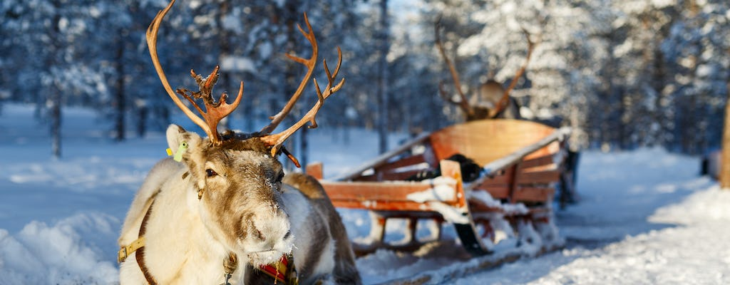 Traditional reindeer farm visit with sledge ride