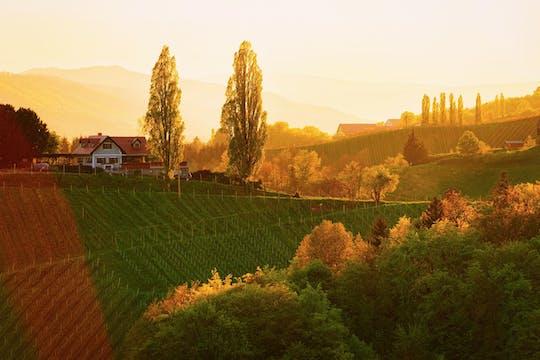 Dagtocht naar wijngebied Maribor, Ptuj en Stajerska vanuit Bled