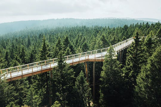Cultural Centre of European Space Technologies and treetops walk