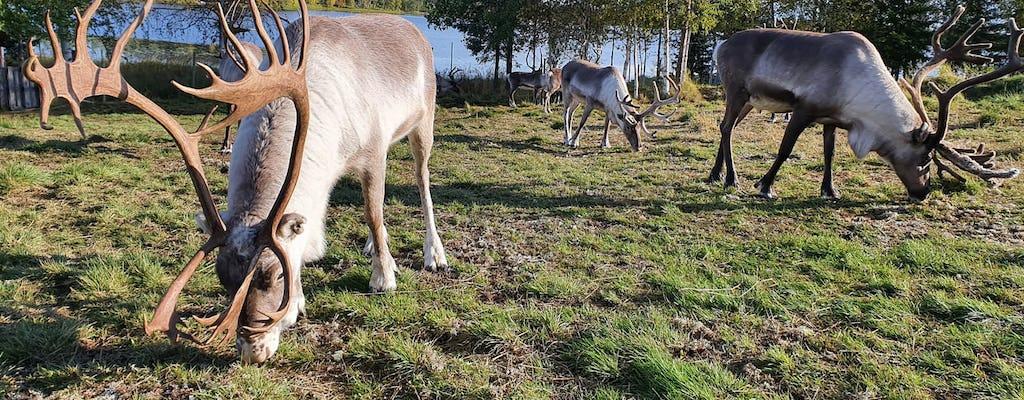 Sommertour zu einer Rentierfarm und einem Husky Park
