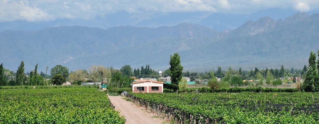 Tour dos vinhos de meio dia em Mendoza com degustação