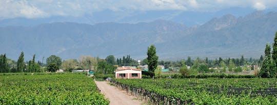 Tour enologico di mezza giornata a Mendoza con degustazione