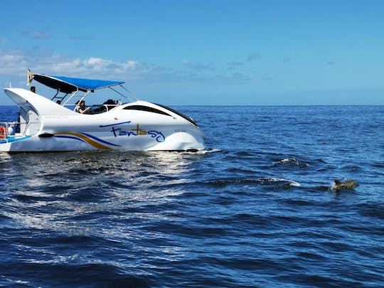 La Palma Dolphin & Whale Watching Cruise Ticket