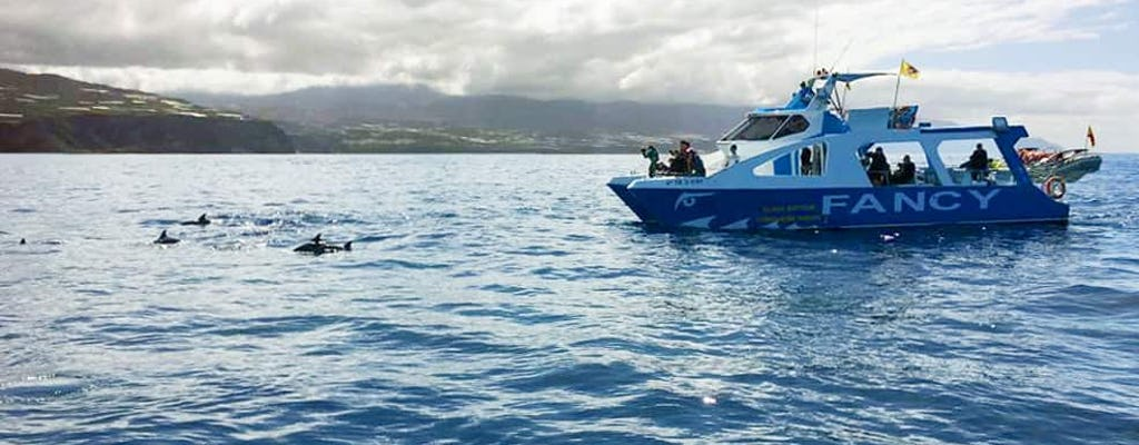 Northwestern La Palma Cruise Ticket