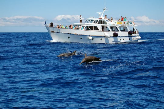 La Gomera Whale & Organos Watching Cruise 3 hours