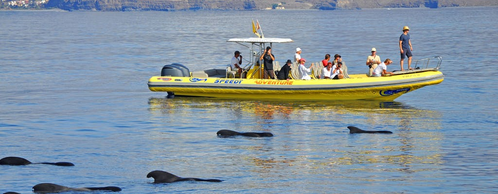 Whale Watching & Los Organos Speedy Tour 3 Hours