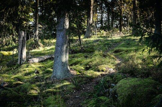 Experiência de reserva natural em lancha RIB