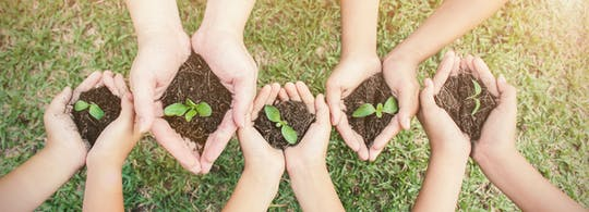 Plant een privéervaring van een boom