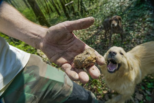 Truffle hunting and world-famous olive oil tasting experience