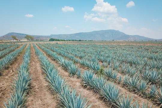 Tequila and distillery tour from Guadalajara