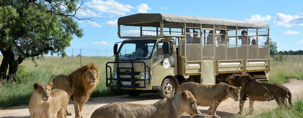 Lion and safari park predator safari tour