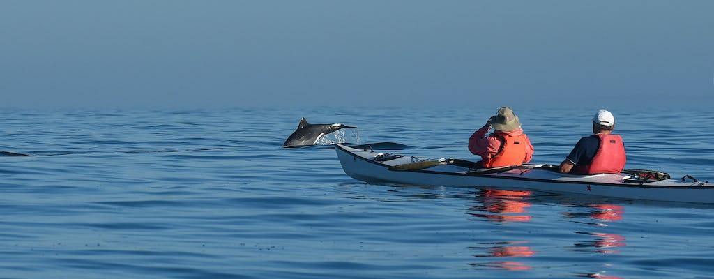 Adelaide Dolphin Sanctuary exclusivo de caiaque para pequenos grupos com almoço