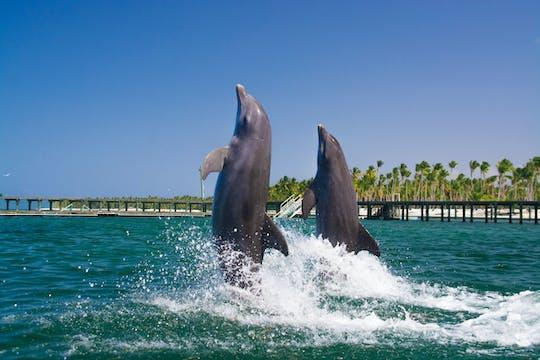 Baignade avec les dauphins à Punta Cana