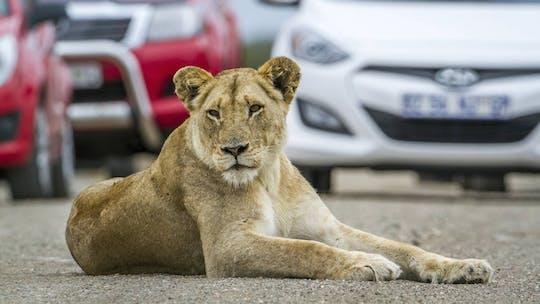 Lion and safari park self-drive tour
