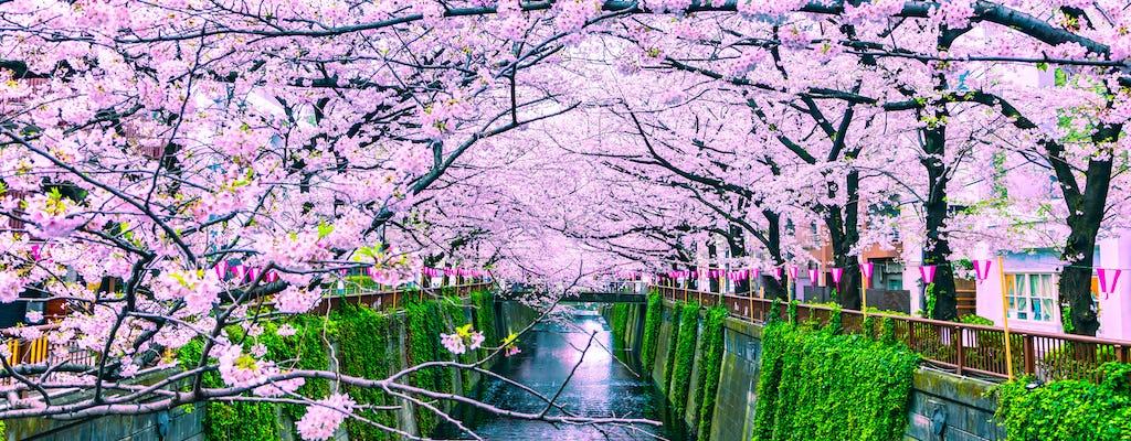Excursão gastronômica diurna de primavera (flor de cerejeira) em Osaka