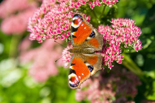 Jardim das borboletas com transferências