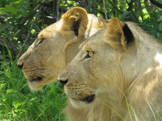 2-dniowe safari w rezerwacie zwierzyny łownej Selous z Zanzibaru