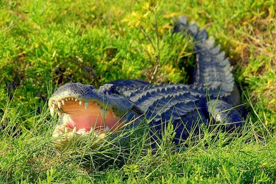 Ultimate Wild Florida adventure package