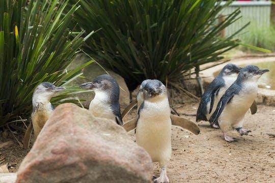 Tour in autobus della fauna selvatica di Phillip Island e Brighton Beach Boxes