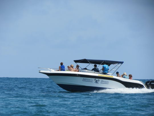 Tour in motoscafo con aquila di Mauritius e delfini