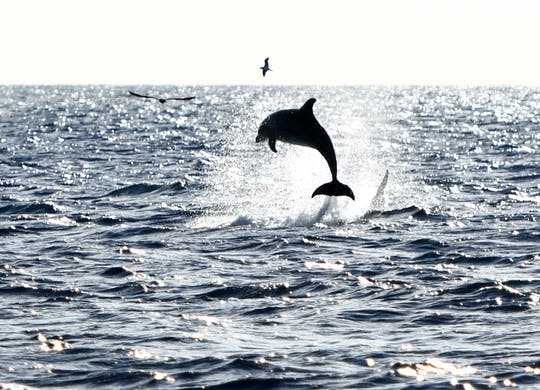 Robinson Catamaran Dolfijnen Spotten Noord-Mallorca met Transfer