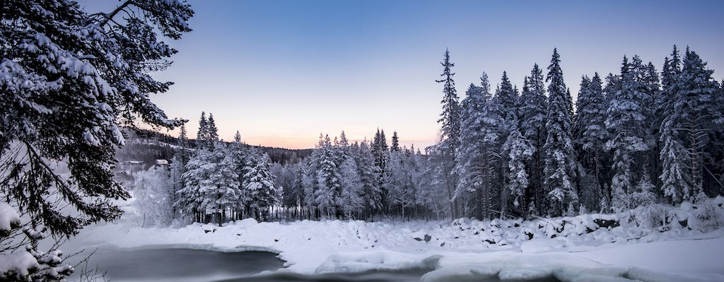 Guided winter nature tour in Storforsen