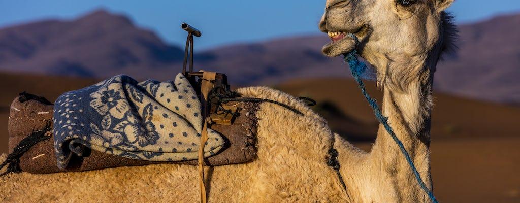 Safári de camelo Agadir
