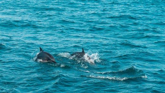 Avistamiento de ballenas Mirissa desde Colombo