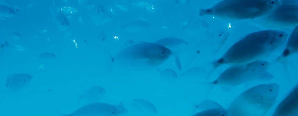 Kurs płetwonurków z Delphinusem